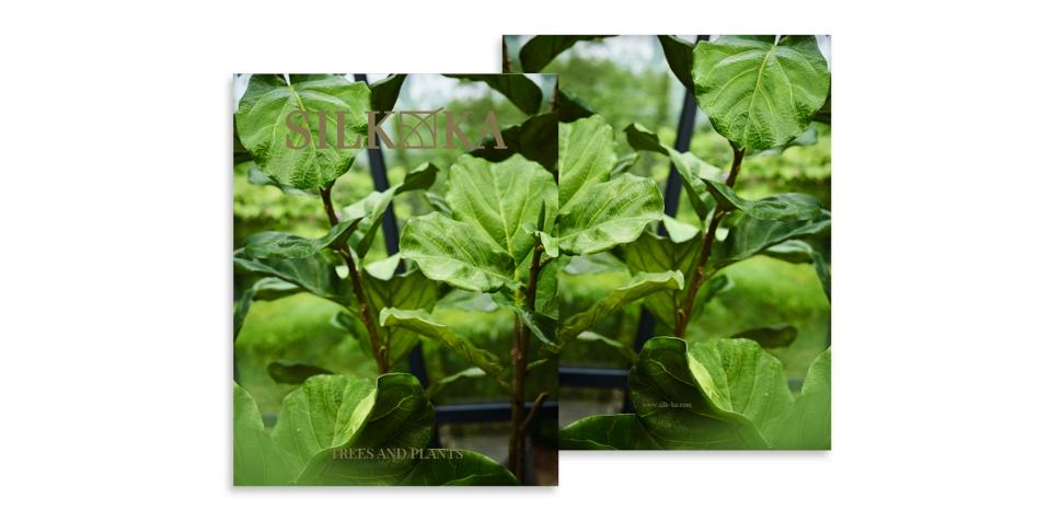 Árboles & Plantas
