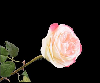 ROOS STEEL ROZ/CR 80 cm