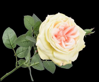 ROOS STEEL KNOP PERZIK 66 cm