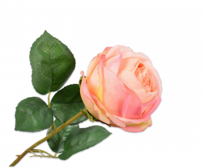 ROOS STEEL ZALM 46 cm
