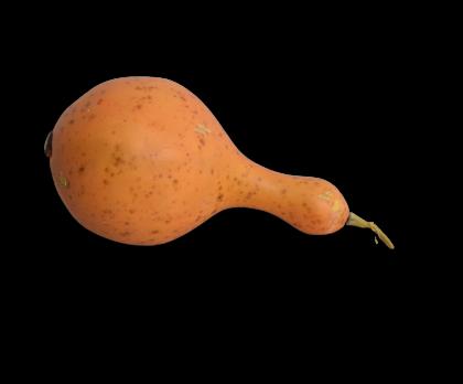 FRUIT POMPOEN ORANJE 18 cm