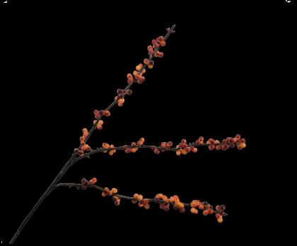 BESSENTAK  RD/GL 81 cm