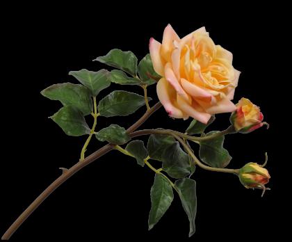 ROOS TAK GL/OR 55 cm