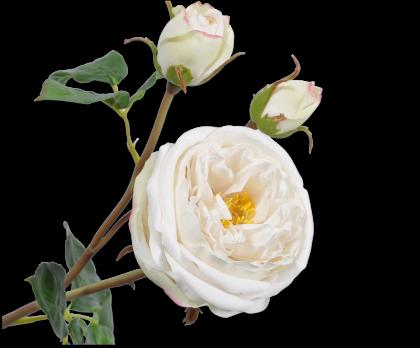 ROOS STEEL WIT 57 cm