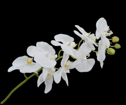 ORCHIDEE STEEL WIT 100 cm