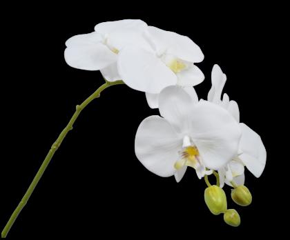 ORCHIDEE STEEL WIT 79 cm