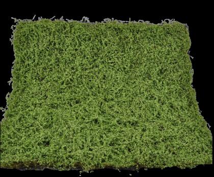 MOSS SHEET GREEN  100 CM