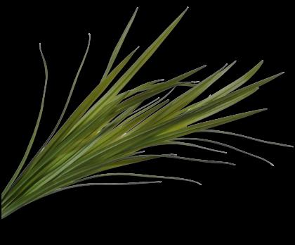 GRAS BUSH GROEN 128 cm