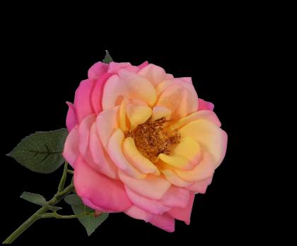 ROOS STEEL ROZ/GL 36 cm