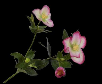 HELLEBORUS SPRAY FUCHSIA  64 CM