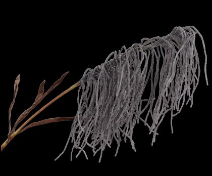 GRAS PLUIM GRIJS 120 cm
