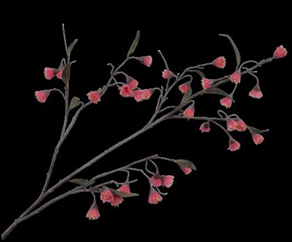 EUCALYPTUS CERISER ROSE  130 CM