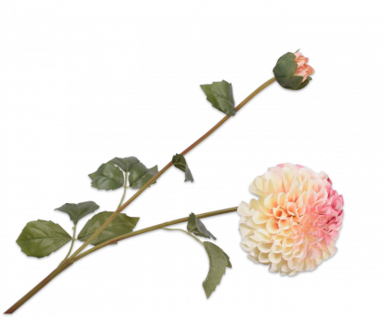 DAHLIA TAK CR/ROZ 80 cm
