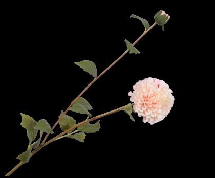 DAHLIA TAK CR/ROZ 87 cm