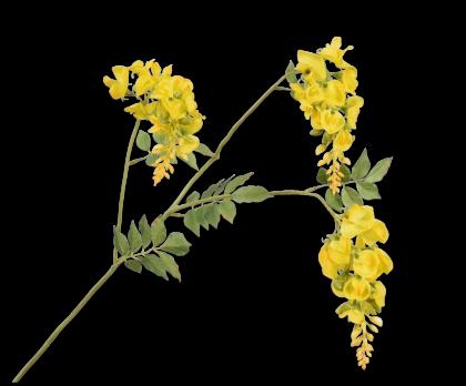 GLICINIA RAMA AMARILLO  114 CM