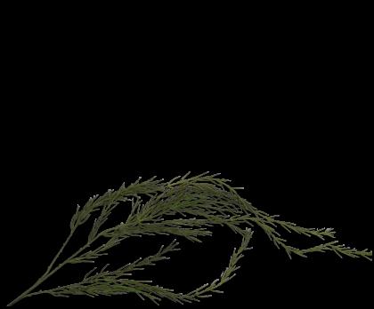 WILLOW BRANCHE HANG GREEN  190 CM