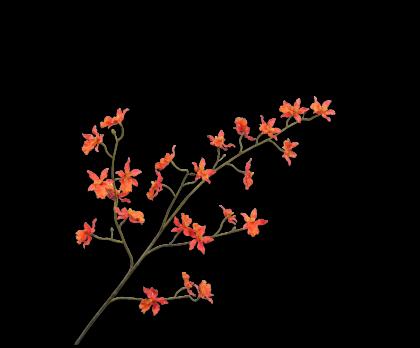 ORCHIDEE TAK ORA LT 100 cm