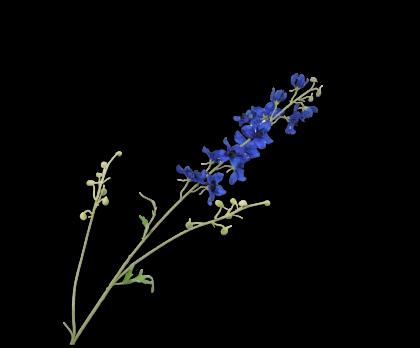 DELPHINIUM  BLUE  101 CM