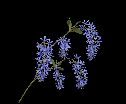 WISTERIA SPRAY BLUE  101 CM