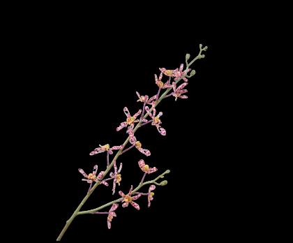 ORCHIDEE ZWEIG BOR/WEI  83 CM