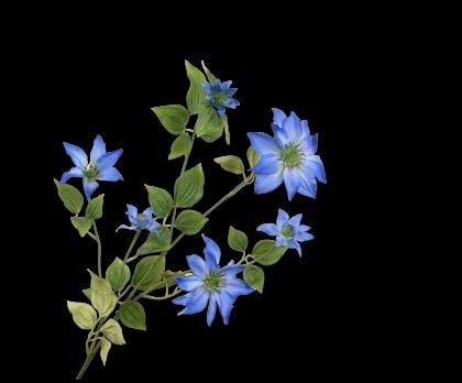 CLEMATIS SPRAY BLUE  114 CM