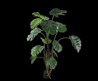 MONSTERA I/POT GREEN  150 CM