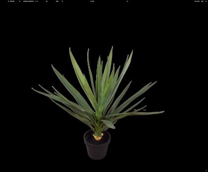 YUCCA I/POT GREEN  70 CM