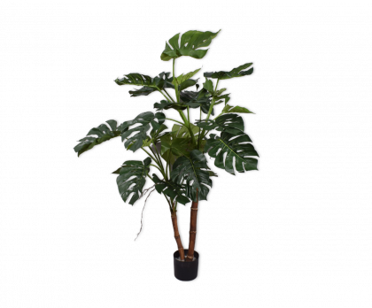 PHILODENDRON  GREEN  135 CM