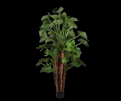 ALOCASIA  GREEN  210 CM