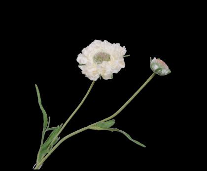 SCABIOSA SPRAY WHITE  53 CM