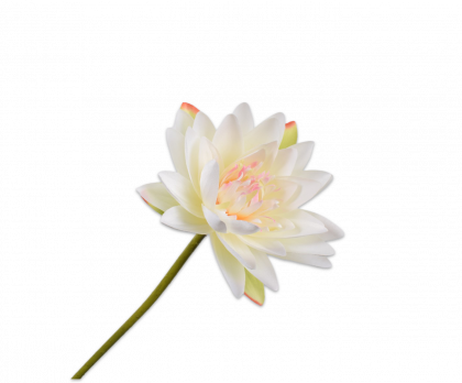 WATER LILY STEM WHITE  75 CM