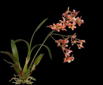 ORCHIDEE  ORANJE 83 cm