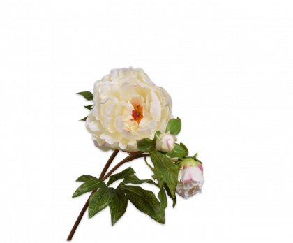 PEONY  WHITE  74 CM
